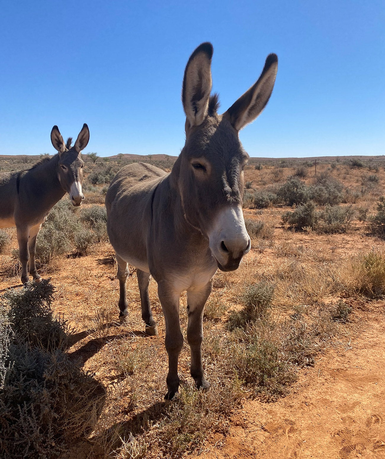 Wild donkeys outside of Broken Hill near the Silverton Hotel the location of our Nomada shoot