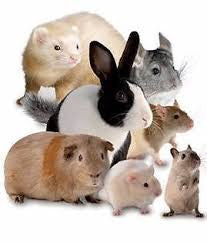 Small Animal Products (rabbits, guinea pigs & ferrets)