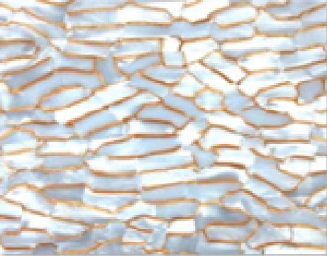 Celluloid 3mm Acrylic Sheet