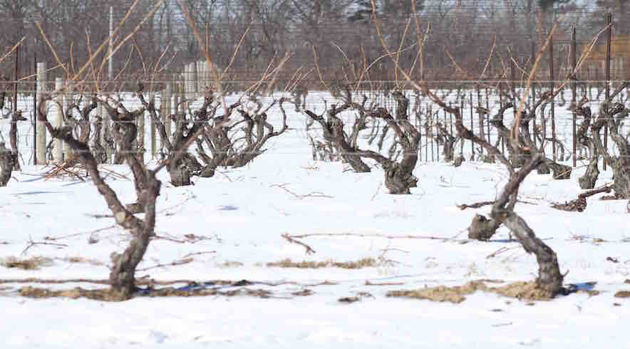 Ontario Vineyards in Wintertime - Tour de Force Wines