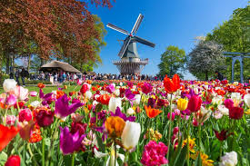 Tulips and Flowers of Holland