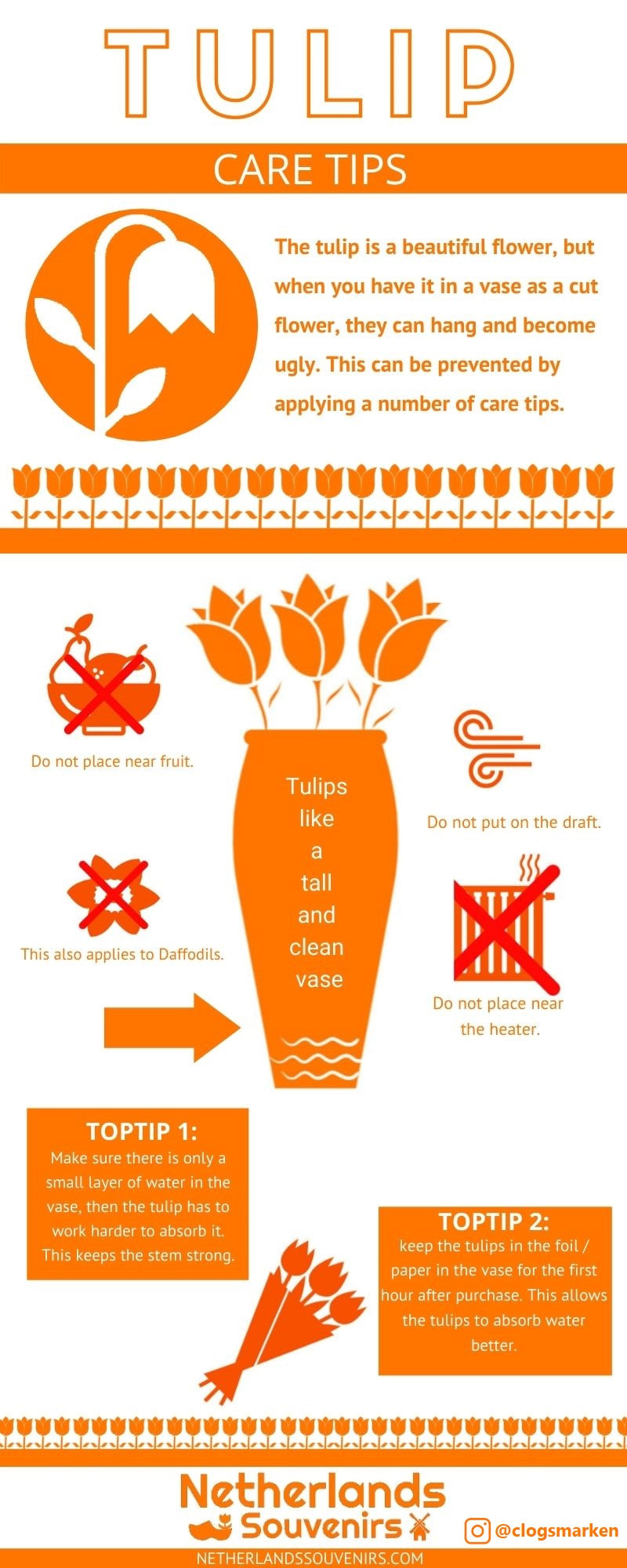 Tulip Care Tips Infographic