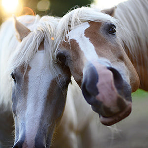 Micro-chipping horses