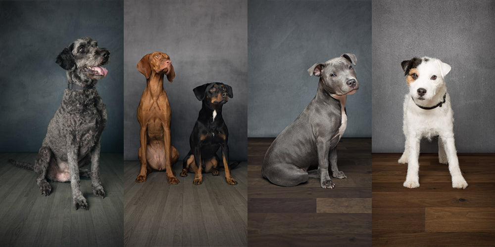 Dog Portrait Day Images