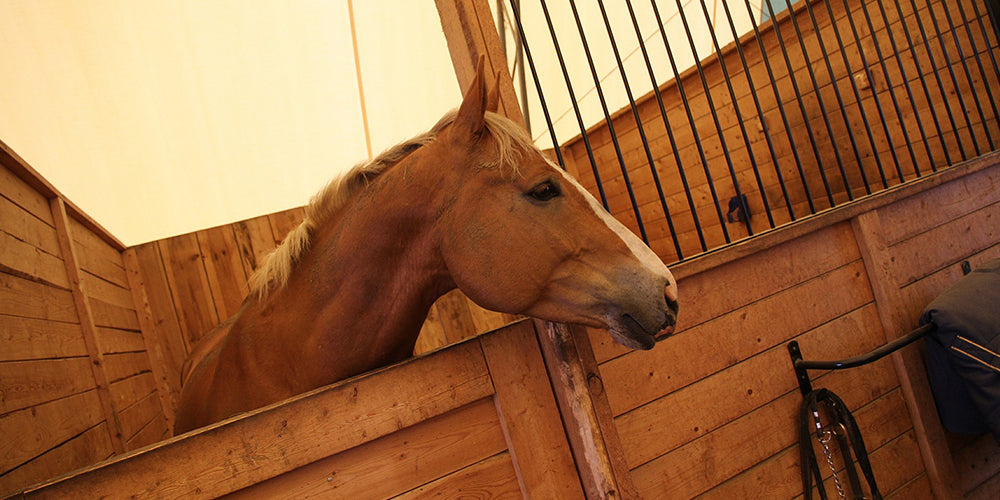 Are horse supplements necessary?