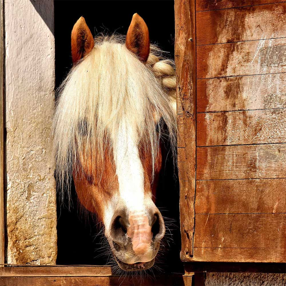 Have you got a healthy horse? How to tell if your horse is healthy. Signs your horse is unhealthy.