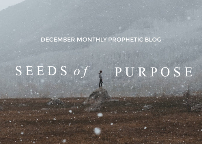 Seeds of Purpose | Dec Monthly Prophetic Blog