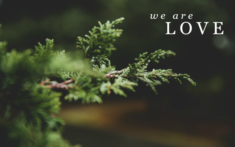 We Are Love | December Monthly Blog