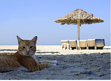 pet cat on vacation