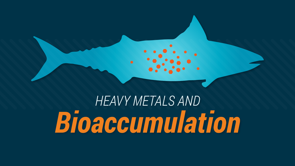 Heavy Metals And Bioaccumulation: What You Need to Know