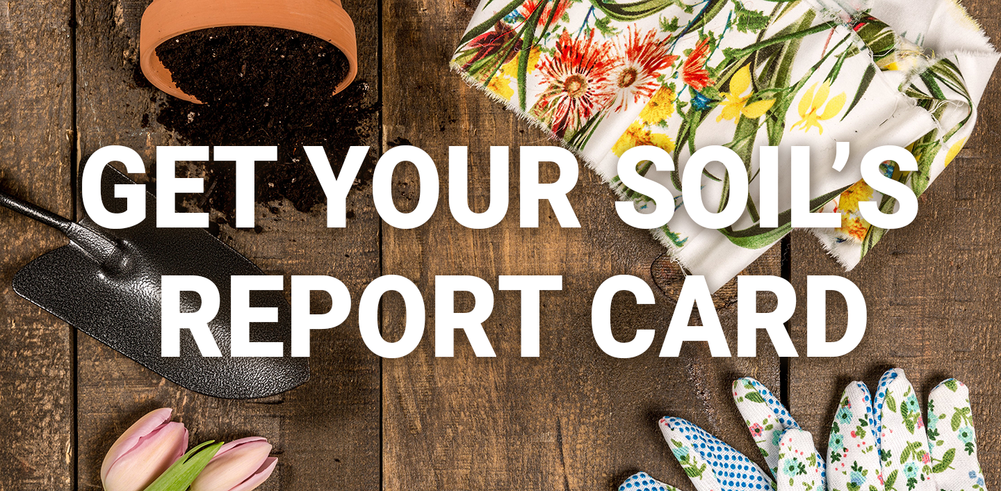 Get Your Soil's Report Card