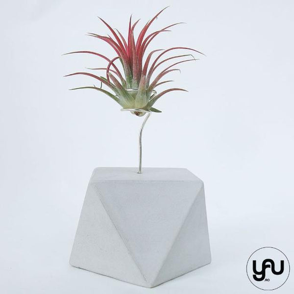 MARTURII plante aeriene in suport turnat GEOMETRIC