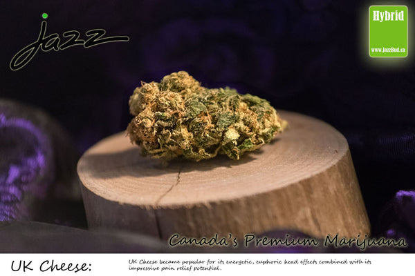 UK Cheese-  Jazz Bud Hybrid - Jazz Bud -Canada's Premium Brand of Online Marijuana - 1