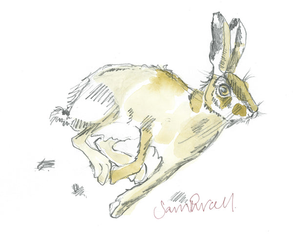 Hurrying hare square card