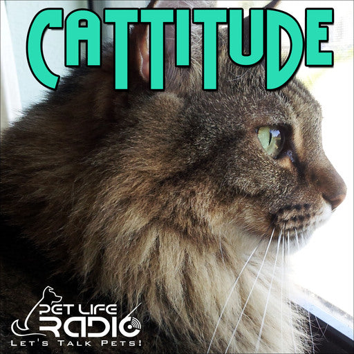 Boxiecat Featured on Cattitude Podcast - listen now!