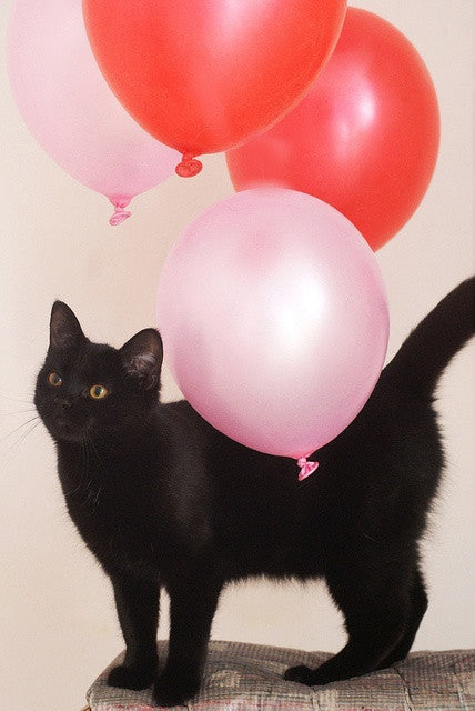 It's Boxiecat's Birthday!