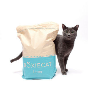 "Boxiecat Announced as ""Best Cat Product of the Year"""