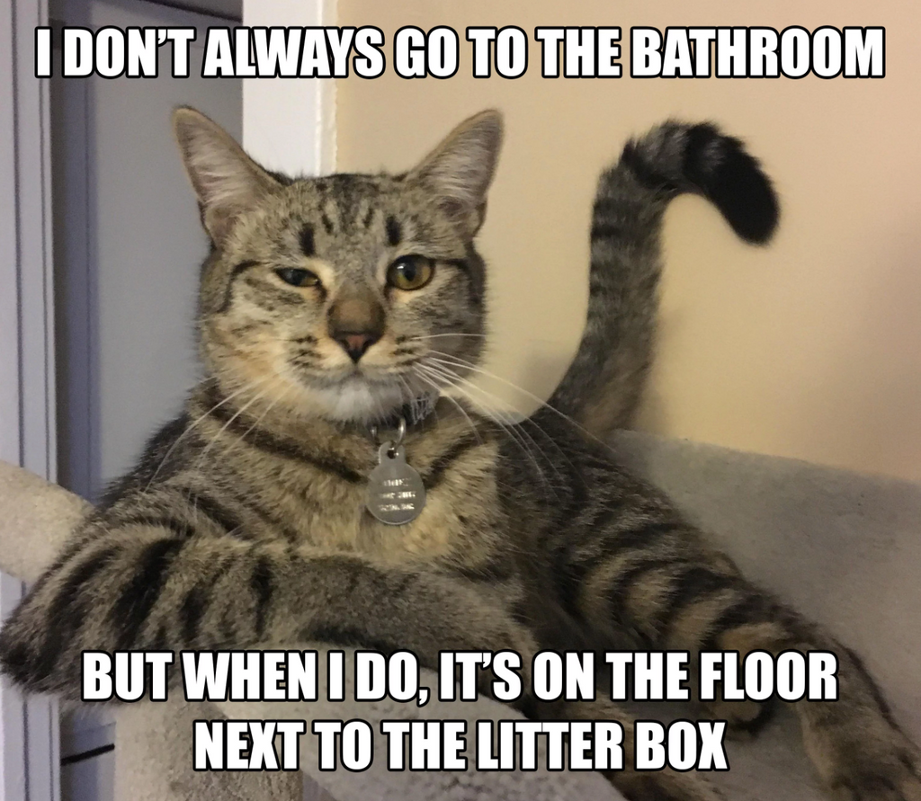 Cat Not Using Its Litter Box? Tips for Solving Litter Box Aversion