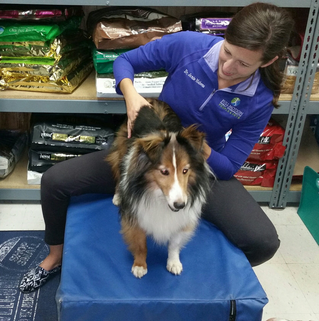 Full Motion Family Chiropractic at Happy Tails Once a Month