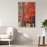 Tennessee Fall Pathway-Gallery Quality Canvas