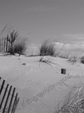 Sand Dunes Print  in Black & White or Color-Fine Art Print