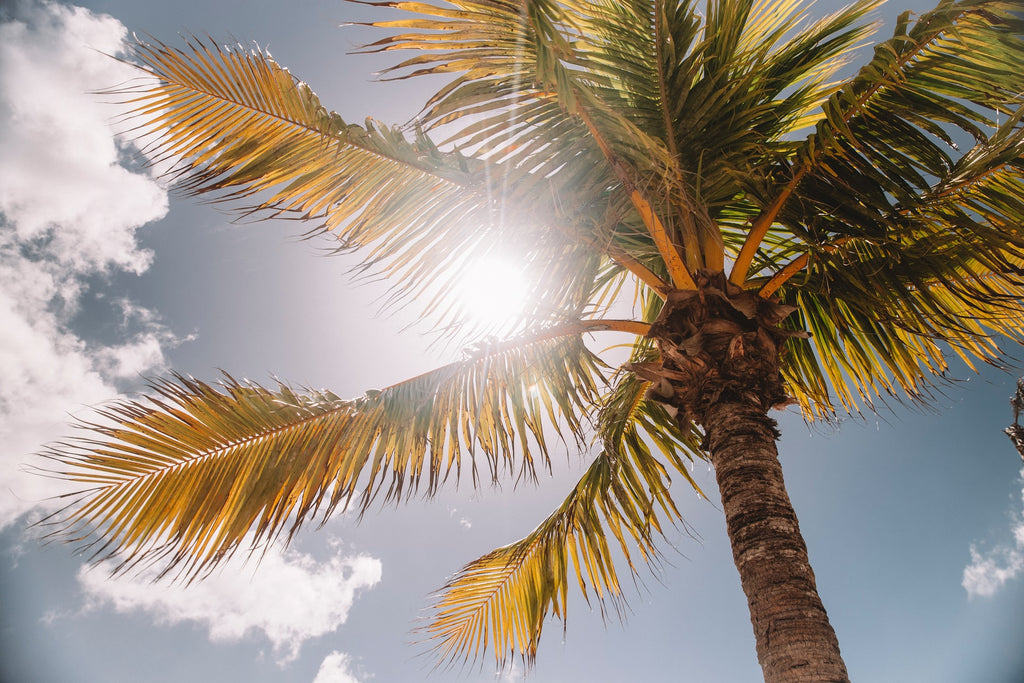 This photo of the sun through the palm tree illustrates that Merino wool fiber has evolved to naturally protect against harmful UV rays.