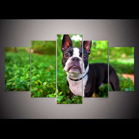 5 Piece Boston Terrier Canvas Print - Canvas Print