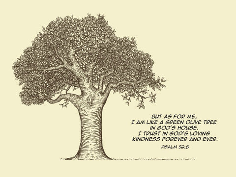 Psalm 52:8 Olive Tree - Canvas Print