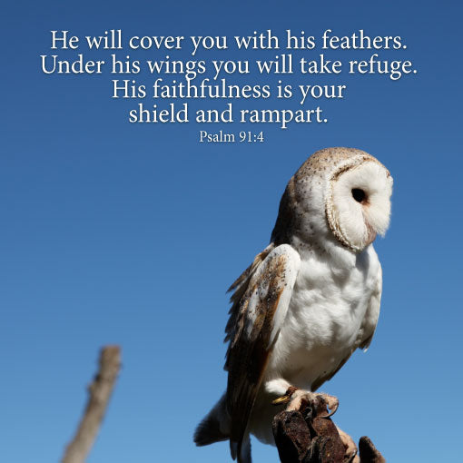 Psalm 91:4 Owl - Canvas Print