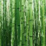 Discovering Bamboo In China