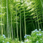 Bamboo and Our Environment