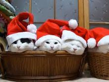 Santa Hats for Dogs & Cats By DOG BLESS YOU
