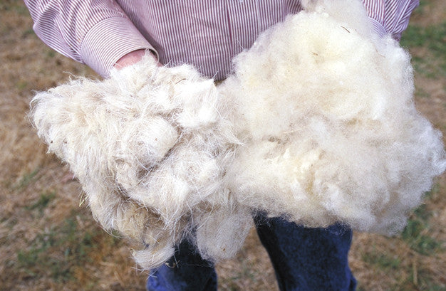 Wool Types: What Are They & What Do They Mean?