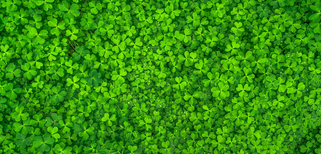 What I remember about St. Patrick's Day growing up in Ireland