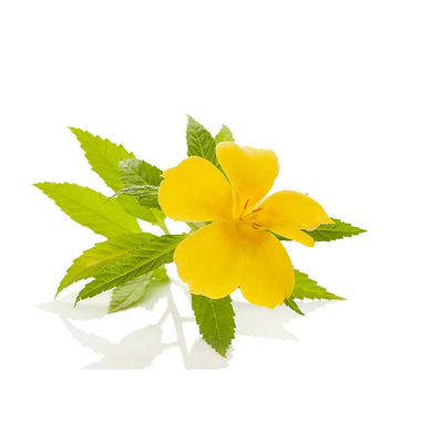 Benefits of Damiana Leaves