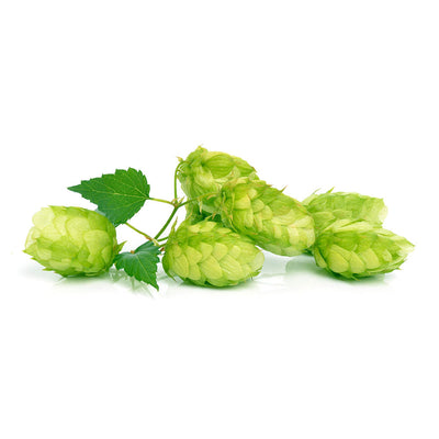 Not Just for Beer - Health Benefits of Hops