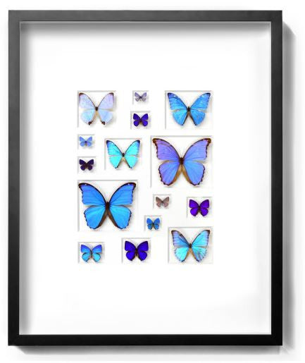 Cerulean Butterflies by Christopher Marley