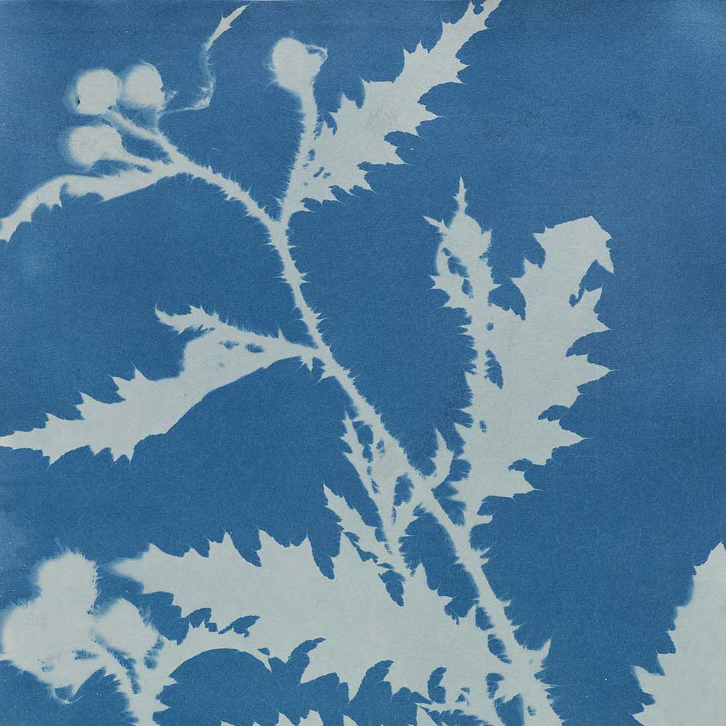 Cyanotype photography: A brief history