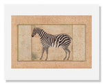 MFA Prints archival replica print of Mansur, Zebra from the Museum of Fine Arts, Boston collection.