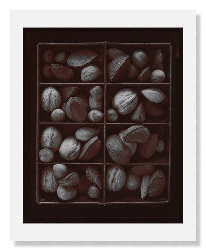 Olivia Parker, Mixed Nuts, Ephemera portfolio