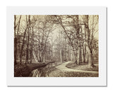 MFA Prints archival replica print of Charles Marville, Path in the Bois de Boulogne from the Museum of Fine Arts, Boston collection.
