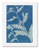 MFA Prints archival replica print of Anna Atkins, Thistle (Carduus acanthoides) from the Museum of Fine Arts, Boston collection.