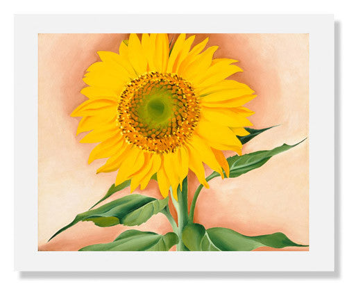 Georgia O'Keeffe, A Sunflower from Maggie