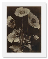 MFA Prints archival replica print of Charles Hippolyte Aubry, Poppies from the Museum of Fine Arts, Boston collection.
