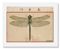 MFA Prints archival replica print of Dragon Fly from Ehagaki sekai from the Museum of Fine Arts, Boston collection.