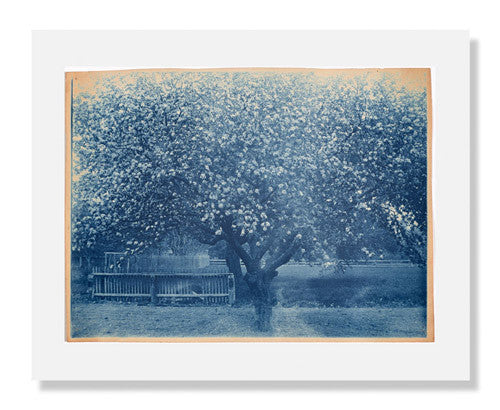MFA Prints archival replica print of Arthur Wesley Dow, Blooming Tree from the Museum of Fine Arts, Boston collection.