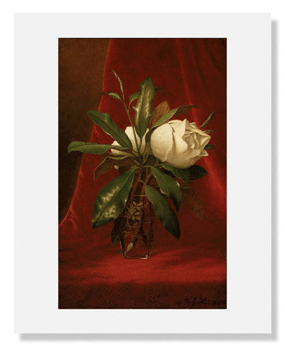 MFA Prints archival replica print of Martin Johnson Heade, Magnolias from the Museum of Fine Arts, Boston collection.