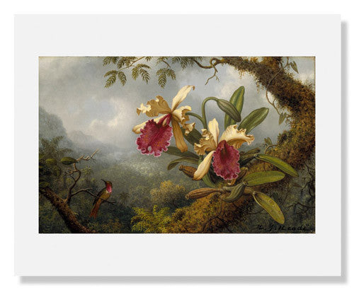 MFA Prints archival replica print of Martin Johnson Heade, Orchids and Hummingbird from the Museum of Fine Arts, Boston collection.