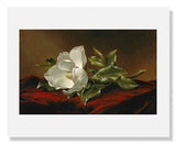 MFA Prints archival replica print of Martin Johnson Heade, Magnolia Grandiflora from the Museum of Fine Arts, Boston collection.