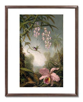 MFA Prints archival replica print of Martin Johnson Heade, Orchids and Spray Orchids with Hummingbirds from the Museum of Fine Arts, Boston collection.